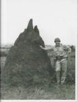 Termite mound in North Africa